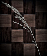 Sea Oats Photo Prints - Sea Oats On Parquet Print by Walt Foegelle