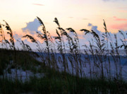 Sea Oats Framed Prints - Sea Oats Silhouette Framed Print by Kristin Elmquist