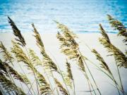 Sea Oats Digital Art Prints - Sea Oats Print by Tonya Laker