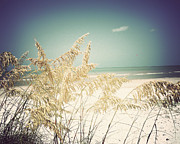 Sea Oats Prints - Sea Oats-Vintage Print by Chris Andruskiewicz