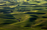 Palouse Prints - Sea of Green Print by Mike  Dawson