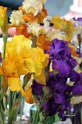Iris Digital Art Prints - Sea of Irises enhanced Print by Suzanne Gaff