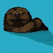 Swim Drawings - Sea Otter - Full Color by Karl Addison