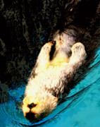 Otter Photos - Sea Otter Back Stroke by Nick Gustafson