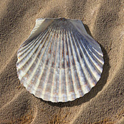 Sea Shell Digital Art Prints - Sea Shell 2 Print by Mike McGlothlen