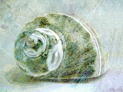 Shell Art Mixed Media Framed Prints - Sea Shell I Framed Print by Ann Powell