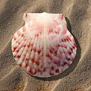 Vacation Digital Art Prints - Sea Shell Print by Mike McGlothlen