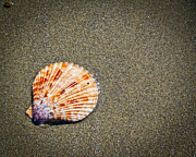 Sea Shell Digital Art Photo Posters - Sea Shell Poster by Steve McKinzie