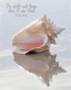All - Sea Shell Stillness by Constance Woods