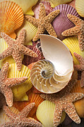Shell Texture Posters - Sea shells and starfish Poster by Garry Gay