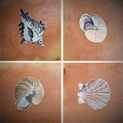 Beach Ceramics Posters - Sea Shells Poster by Andrew Drozdowicz