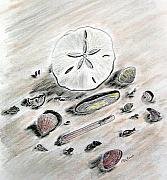 Atlantic Ocean Pastels Metal Prints - Sea Shells Metal Print by Diane Frick