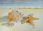 Ocean Shore Drawings Prints - Sea shells Print by Eva Ason