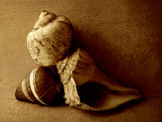 Sea Shell Art Mixed Media Prints - Sea Shells II sepia Print by Ann Powell