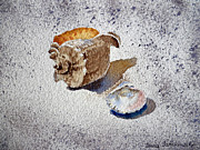 Sea Shells Painting Posters - Sea Shells Poster by Irina Sztukowski