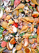 Sea Shell Prints - Sea Shells Print by Jim DeLillo