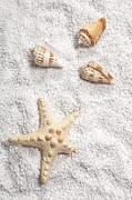 Sandy Beach Posters - Sea Shells Poster by Joana Kruse