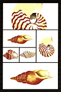 Sea Shells Painting Posters - Sea Shells Number Two Poster by Michael Vigliotti