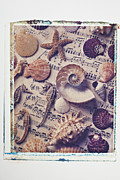 Seahorses Prints - Sea shells on sheet music Print by Garry Gay