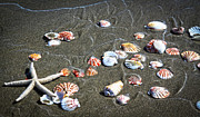 Sea Shell Digital Art Photo Posters - Sea Shells Poster by Steve McKinzie