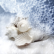 Shell Pattern Metal Prints - Sea Snails Metal Print by Maika 777