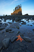 Byron Jorjorian and Photo Researchers - Sea Stacks and Starfish
