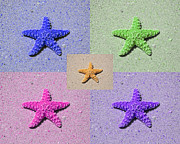 Beachcomber Prints - Sea Star Serigraph - 5 Stars Print by Al Powell Photography USA