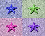Animal Photography Digital Art - Sea Star Serigraph - 4 Stars by Al Powell Photography USA