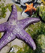 Marine Life Paintings - Sea Stars by David Wagner