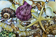 Beach Glass Posters - Sea Treasure - landscape Poster by Paul Ward