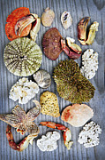 Marine Life Photos - Sea treasures by Elena Elisseeva