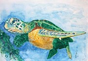 Paula Steffensen Art - Sea Turtle 1. by Paula Steffensen