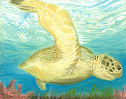 Sea Life Pastels Prints - Sea Turtle  Print by Jackie Novak