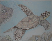 Relaxing Drawings - Sea Turtle by Troy Howell