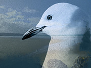 Sea Watch Prints - Seabird Print by Karen Lewis