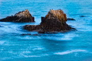 Orange County Art - Seabirds on Rocks by Utah Images