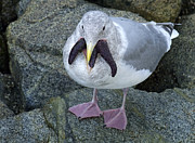 Sea Gull Photos - Seafood For Lunch by Bob Christopher