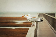 Railing Prints - Seagul Print by Lucy Loomis, Photographer