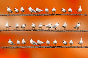 Flock Of Bird Art - Seagul Surprise by Spangles44 flickr
