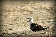 Layered Prints - Seagull 2 - Jersey Shore Print by Angie McKenzie