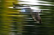 Seagull 2 Moewe 2 Print by H a r a l d B e r t l i n g