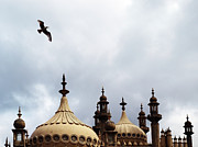 Flying Seagull Art - Seagull And Brightonpavillion by Darren Lehane