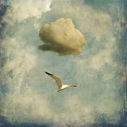 Sonya Kanelstrand Metal Prints - Seagull and cloud Metal Print by Sonya Kanelstrand