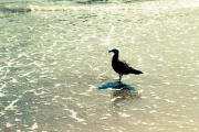 Beach Scenery Metal Prints - Seagull Metal Print by Ariane Moshayedi