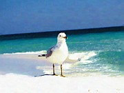 Navarre Beach Photographs Posters - Seagull at Beach Poster by Mander Jack