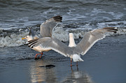Sea Birds Prints - Seagull Breeze Print by Debra  Miller