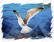 Sea Birds Prints - Seagull Print by Debra  Miller