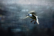 Seagull Photos - Seagull flying by Cristina Lichti