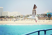Railing Prints - Seagull Flying Print by Libertad Leal Photography