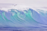 Power Photos - Seagull Flying Over Ocean by John White Photos